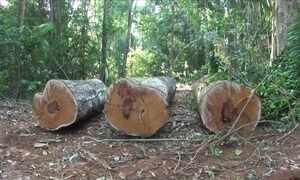 Floresta no Pará pode ter área de proteção ambiental reduzida