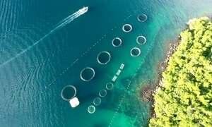 Fazenda marinha na Ilha Grande é exemplo para o país e o mundo