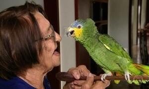 Família da Paraíba vai à Justiça para que idosa possa ficar com papagaio