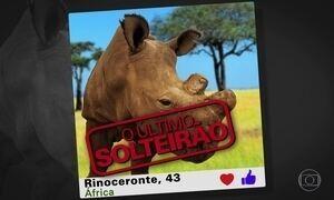 Rinoceronte adere a aplicativos de namoro para arranjar uma parceira