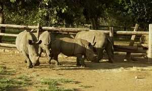 Fant360: veja trabalho de centro que ajuda animais ameaçados na África