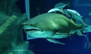 Hoje é dia de aquário: viagem ao fundo do mar