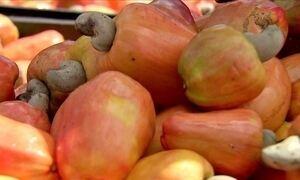 Ceará se firma como principal produtor de caju no Nordeste