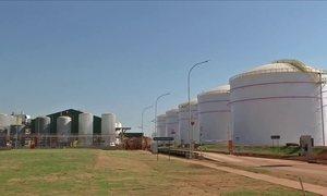 Usina de etanol de milho deve aquecer a demanda pelo cereal em MT