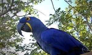 Comunicação das aves do Pantanal é projeto de estudo para cientistas