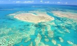 Lama vinda de Mariana põe a vida dos corais de Abrolhos em perigo