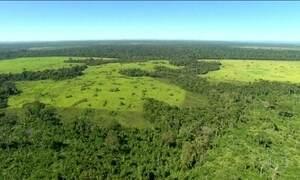 Projeto reacende polêmica sobre limites da floresta do Jamanxim