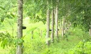 Experiência no Acre tem ajudado a reduzir o desmatamento na Amazônia