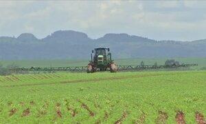 Previsão inicial mostra que área de milho safrinha deve cair em MT