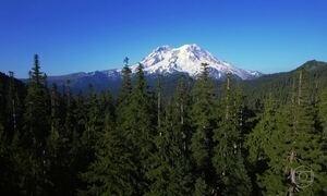 Esmeralda dos EUA: estado de Washington tem florestas intocadas