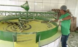 Mecanização ajuda a aumentar a produtividade da mandioca no AC
