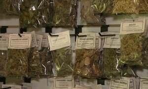 Mãe e filha investem em plantas medicinais e casa de chás em SP
