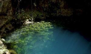 Floresta tem rede de 1,3 mil quilômetros de túneis e cavernas submarinos