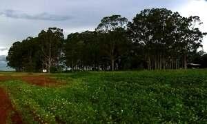 Bens de traficantes incluem criações de gado, plantações e pista de pouso