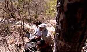 Pesquisa estuda impacto do homem na vida dos animais do Cerrado