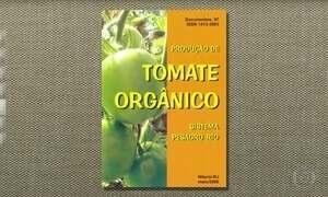 Saiba como controlar a traça na plantação de tomate orgânico
