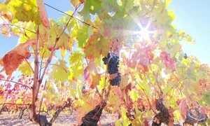 Forte e doce: saiba o que torna o vinho do Porto tão especial