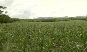 Agricultores do Ceará devem colher uma boa safra