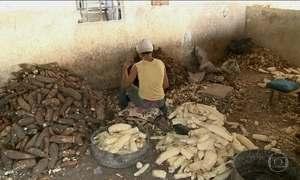 130 anos após Lei Áurea, Brasil ainda luta para erradicar o trabalho escravo