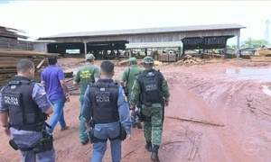 Operação policial combate extração ilegal de madeira na região Norte