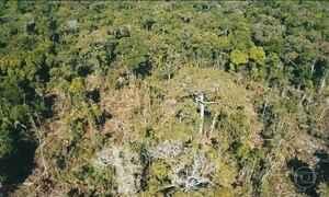 Acampamento de grileiros em parque nacional de Rondônia é desmontado