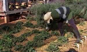Empresário cria fazenda online para criação de horta e galinhas de clientes