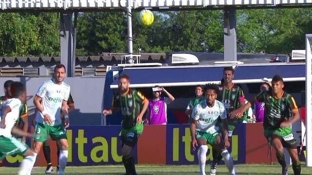 BLOG: Palmeiras