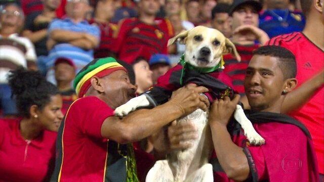 Uniformizado, cachorro vira o xodó da torcida do Sport