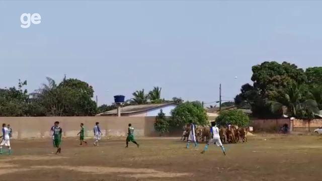 Boiada invade campo de futebol durante partida em Porto Velho