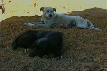 Two dogs have taken up residense in the Novo Gama municipal graveyard