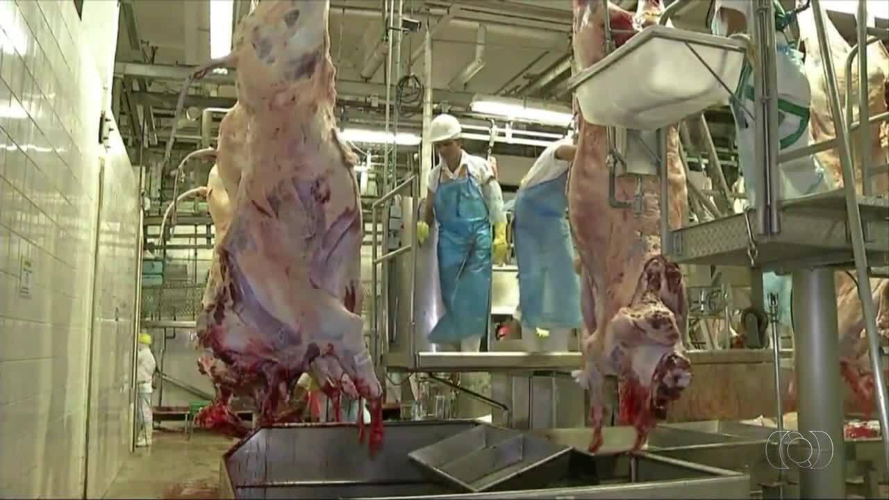 Previsão é de queda para o mercado do boi gordo