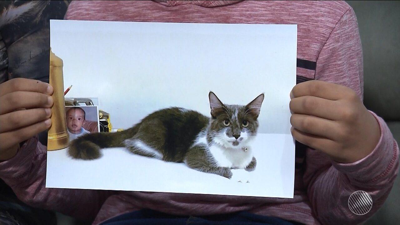 Resultado de imagem para Família da Bahia procura por gato que sumiu há uma semana e que ajudava criança com autismo