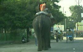 Carros disputam espaço com elefantes