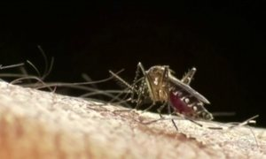 Zika já tem quase 500 casos registrados em Nova York