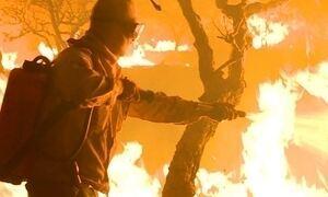 Acre e Tocantins sofrem com aumento do número de incêndios ambientais