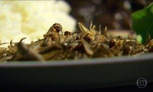 Pesquisadores americanos garantem que grilos serão a comida do futuro