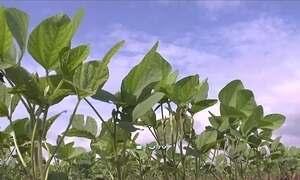 Agricultores aproveitam a volta da chuva para plantar soja no TO e no MA