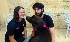 Cães de assistência transformam a vida de pessoas que precisam de atenção especial