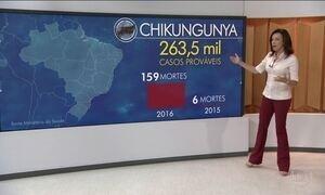 Brasil registra mais de 263 mil casos de chikungunya em 2016