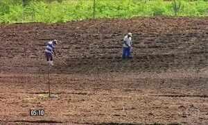 """Agricultores aproveitam a """"quadra invernosa"""" para semear no Ceará"""