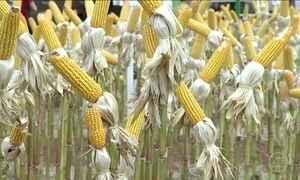 Feira em GO traz as principais novidades do agronegócio