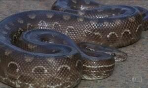 Cobras invadem casas em Brasília e assustam moradores