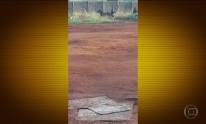 Policiais rodoviários matam cavalo a tiros e causam revolta, em Goiás