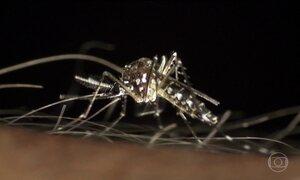 Casos de chikungunya no CE dobram em comparação com todo o ano de 2016