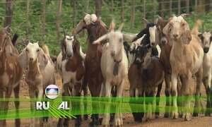 Globo Rural - Edição de 17/09/2017