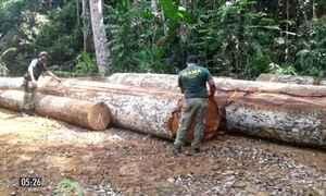 Ibama apreende mais 500 metros cúbicos de madeira ilegal em reserva indígena