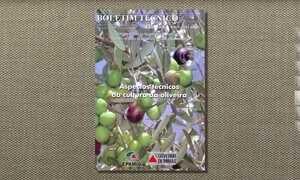 Livro reúne orientações para cultivar oliveiras