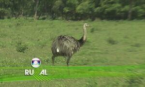 Globo Rural - Edição de domingo, 12/11/2017