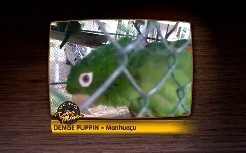 Telespectadora manda vídeo de papagaio