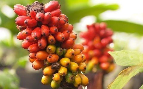 Jardim botânico, Inhotim tem trabalho de produção de plantas ()